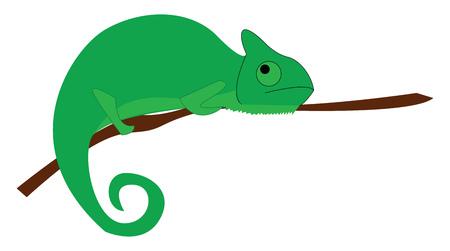 A big green chameleon vector or color illustration Foto de archivo - 123411567
