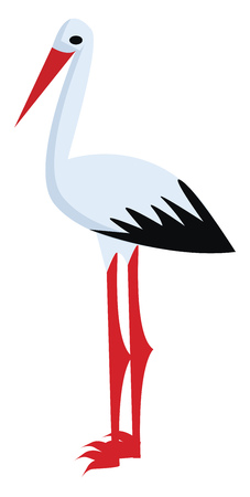 A white Stroke bird vector or color illustration
