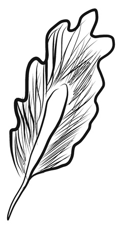 Black and white picture of a birds feather vector color drawing or illustration