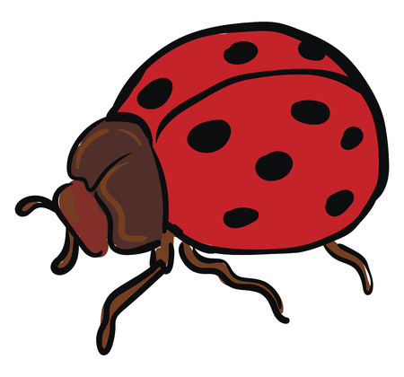 A ladybug with a brown body two antennae six legs and red wings has black polka dots vector color drawing or illustration Ilustrace