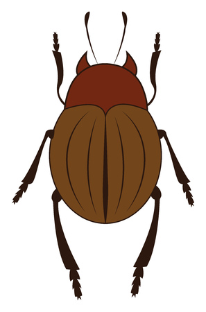A giant brown beetle with six legs two antennae crawling upwards vector color drawing or illustration