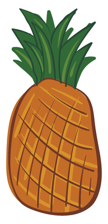 A drawing of a whole orange pineapple with green leaves on the top vector color drawing or illustration
