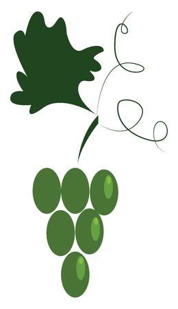 Un grappolo d'uva verde appeso a un disegno o illustrazione a colori vettoriale di vite