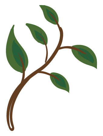 The picture of green leaves that have flat surfaces and blunt tips vector color drawing or illustration