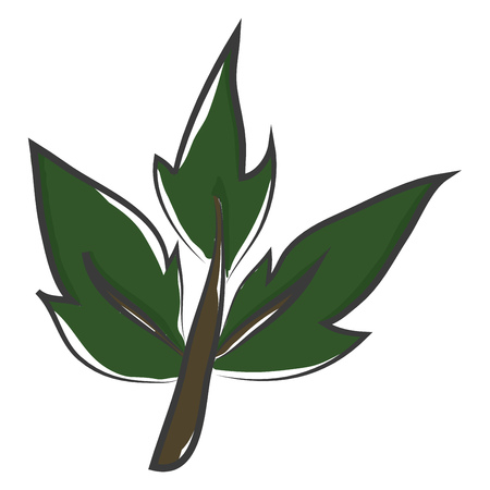 The stem of a ladder plant with three green leaves that have pointed tips vector color drawing or illustration