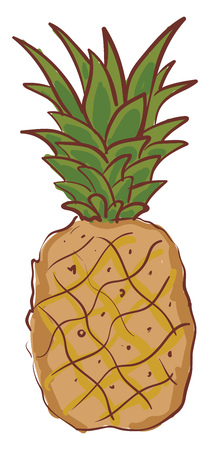 A large juicy tropical fruit with fleshy sweet surrounded by a tough segmented skin and topped with a tuft of stiff green leaves vector color drawing or illustration