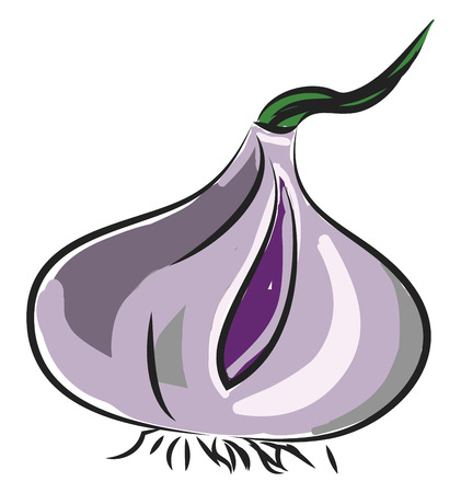 A purple colored bulb with roots onion, vector, color drawing or illustration.