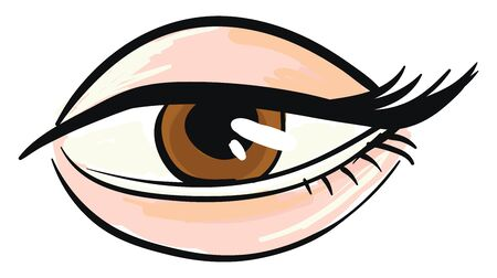 Woman's brown eye White background