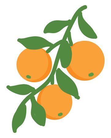 Orange illustration vector on white background Ilustracja