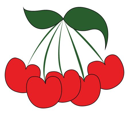 A bunch of sweet cherries which are fresh and red in color vector color drawing or illustration