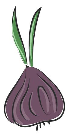 A violet color bow onion with green leaves on the top vector color drawing or illustration