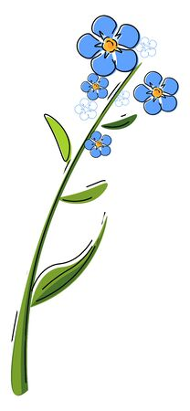 A plant of lot of blue flowers known as forget me not flower vector color drawing or illustration Çizim