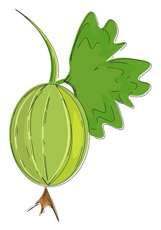 A fresh Indian gooseberry with a leaf vector color drawing or illustration Ilustracja