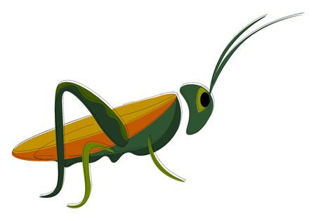 A green grasshopper with orange and yellow wings vector color drawing or illustration 일러스트