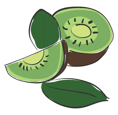 A half cut kiwi into two halves and a slice vector color drawing or illustration