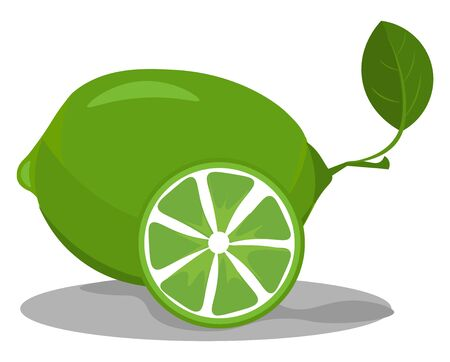 Lime in green color which is not ripe vector color drawing or illustration