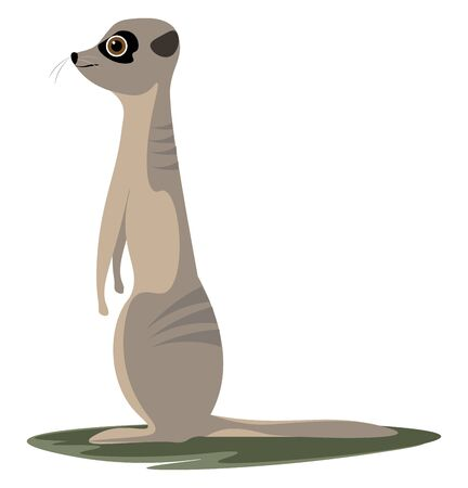 A cute meerkat standing and looking forward vector color drawing or illustration