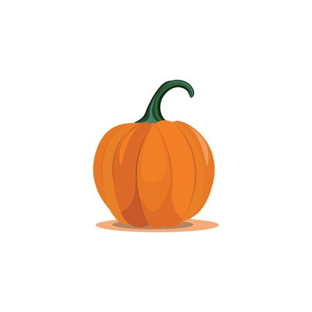 A large sweet pumpkin ready to cook vector color drawing or illustration Çizim