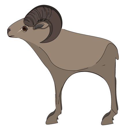 A tall mouflon with its horns bend vector color drawing or illustration