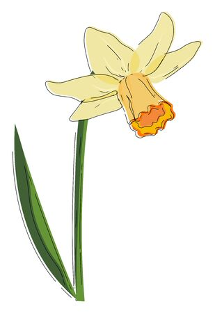 A plant bloomed with a beautiful narcissus flower vector color drawing or illustration