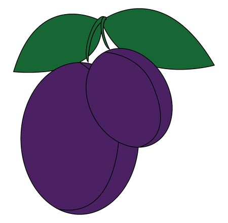 A pair of violet plumbs with green leaves vector color drawing or illustration