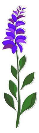 A sage with violet flower used for cooking vector color drawing or illustration