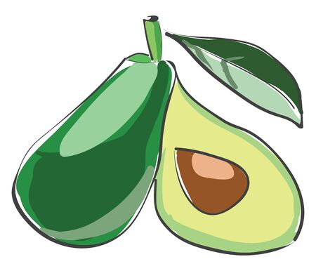 A small sliced avocado with green leaves vector color drawing or illustration