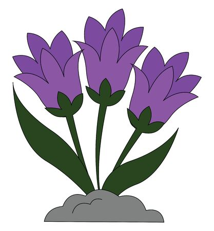 A plant of snowdrop flowers in bright violet color vector color drawing or illustration