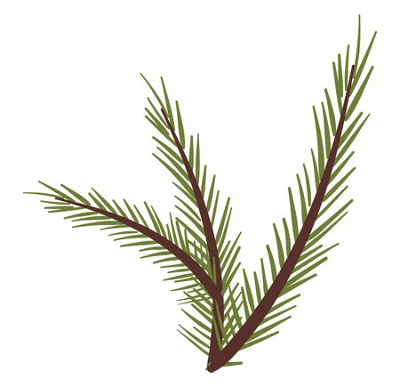 A typical representation of the needles of the spruce tree that grows out of small woody pegs from the branches  vector  color drawing or illustration
