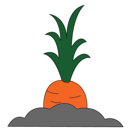 Painting of a giant orange carrot topped with a tuft of green leaves grows above the soil  vector  color drawing or illustration  イラスト・ベクター素材