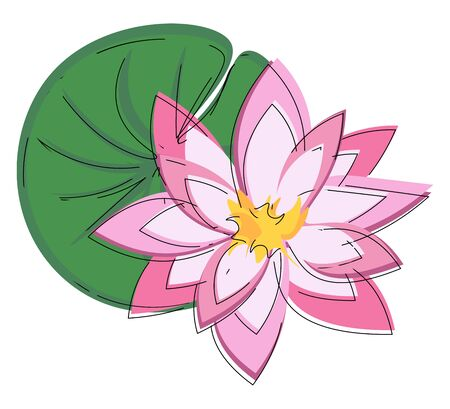 A beautiful pink water lily with a large green leaf floating on the water vector color drawing or illustration