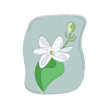 Portrait of a fragrant white jasmine flower with a leaf and bud over grey background  vector  color drawing or illustration