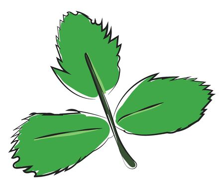 Clipart of three ovate-shaped green leaves on a slender stalk  vector  color drawing or illustration