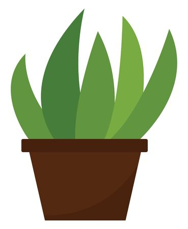 Clipart of home plant with elongated oval-shaped green leaves growing in a brown pot  vector  color drawing or illustration