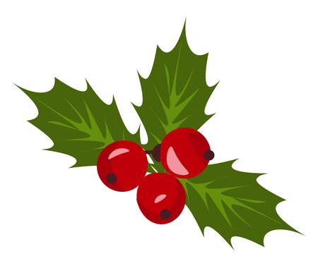A Christmas holly berry mistletoe  a plant that grows on a range of trees including willow  apple and oak trees  with red berries and broad green leaves  vector  color drawing or illustration Stock Illustratie