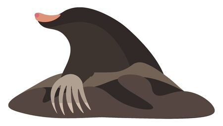 Back pose of a small burrowing mammal with dark brown velvety fur  a long peach-colored muzzle  and powerful forelimbs with large paws adapted for digging  vector  color drawing or illustration