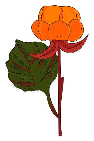 Nordic berry flower in pale red color with a leaf having handlike lobes on a straight  branchless brown stalk  vector  color drawing or illustration