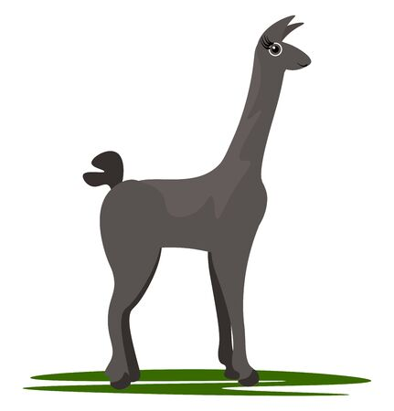 Cartoon brown Llama with a stout body  long neck  tall legs  heart-shaped tail  looking keenly in search of its prey while grazing on the green grassland  vector  color drawing or illustration