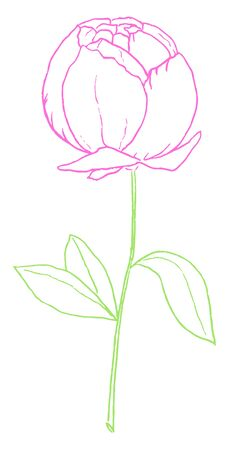 Drawing of a purple-colored rose with green leaves on a slender stalk looks beautiful  vector  color drawing or illustration Stock Illustratie