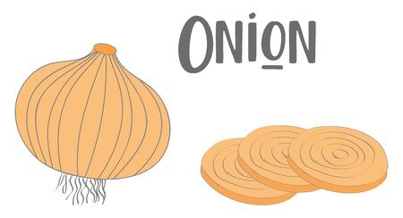 Drawing of a whole onion and three slices of onion in brown skin and represented with the wordings ONION  vector  color drawing or illustration 向量圖像