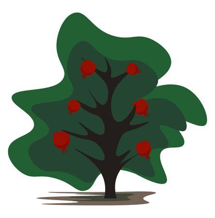 Cartoon pomegranate tree bearing plenty of pomegranate fruits looks cute vector color drawing or illustration Ilustración de vector