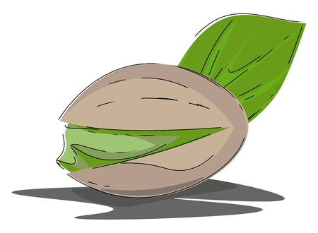 Cartoon oval nut of the pistachio tree that are smaller and have a soft shell  vector  color drawing or illustration 向量圖像