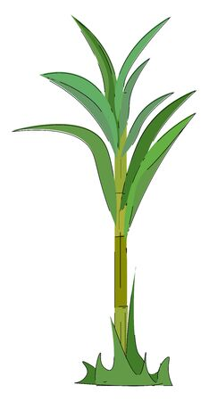 A sugarcane plant with little stems at the base has stout  jointed  fibrous stalks with leaf divided into two parts sheath and blade split by a blade joint  vector  color drawing or illustration Иллюстрация