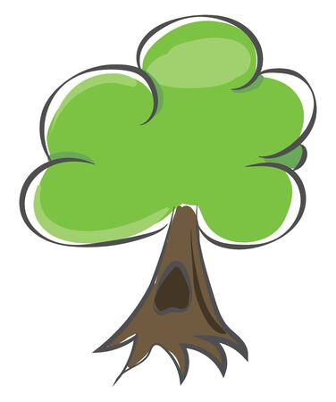 Drawing of a tree with surface roots  green leaves  a single brown trunk having a semi-enclosed cavity or a hole  and grown to a considerable height  vector  color drawing or illustration