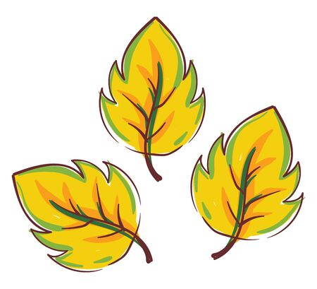 Clipart of three autumn leaves turning yellow have a round-toothed and scalloped edge  vector  color drawing or illustration