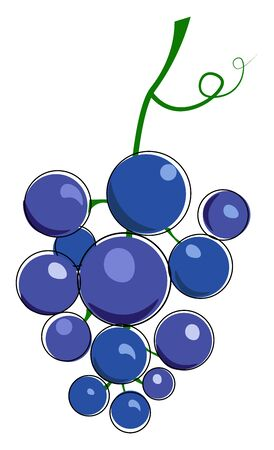 Cluster of blue grape with tendril illustration vector on white background