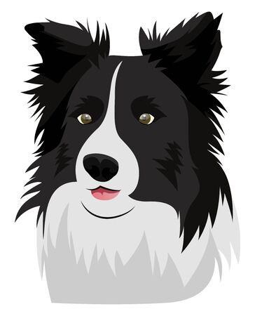 Border Collie illustration vector on white background