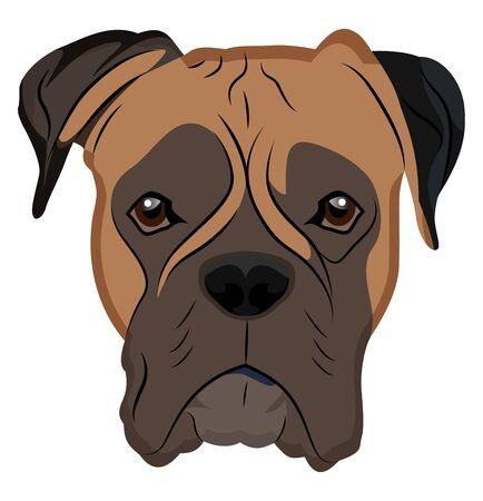 Boxer illustration vector on white background