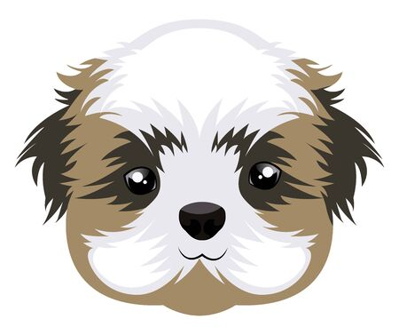 Shih Tzu illustration vector on white background