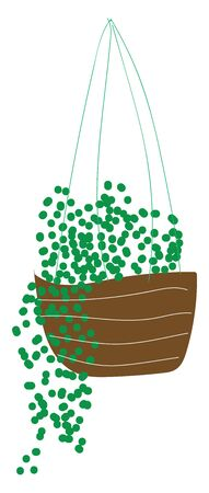 Green plants hanging in flower pot, illustration, vector on white background. 向量圖像